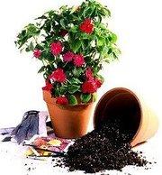 ЭКОПИТ активная природная минеральная добавка для роста растений